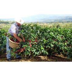 """Кофе """"Коста-Рика Сан Рафаэль для эспрессо"""" в зернах"""