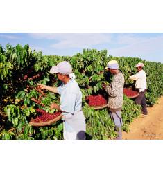 """Кофе """"Бразилия Да Лагоа для фильтра"""" в зернах"""