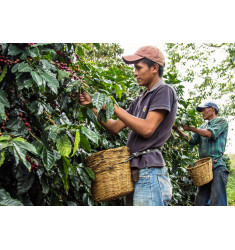 """Кофе """"Гондурас Сан Маркос для эспрессо """" в зернах"""