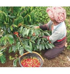 """Кофе """"Суматра Гайо для фильтра"""" в зернах"""